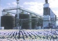Sunflower Seed Processing Facility